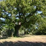 Fayence, wonderfull property on 5 acres - 8