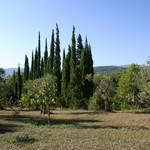 Fayence, wonderfull property on 5 acres - 4